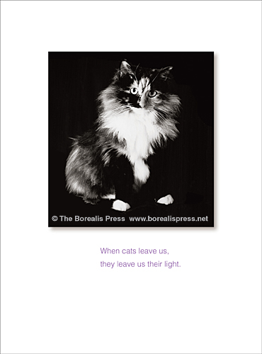 pet sympathy cards the borealis press inc
